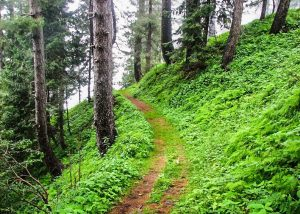 Nathia Gali to Miranjani Hiking Track Disney.pk